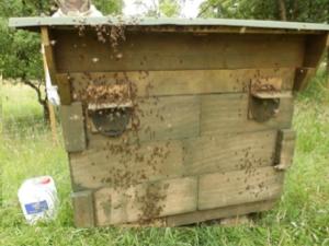 Lune Valley Beekeepers Alternative Beekeeping