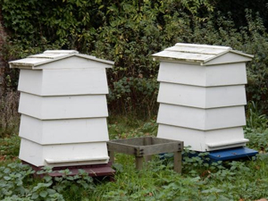 Lune Valley Beekeepers Conventional Beekeeping