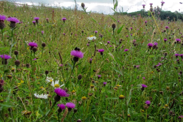 Pollinator Patches Lune Valley Beekeepers