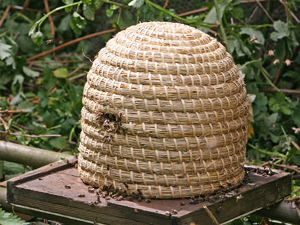 Lune Valley Beekeepers Traditional Beekeeping